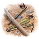 Ants-inventors