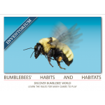 Bumblebee habits and habitats