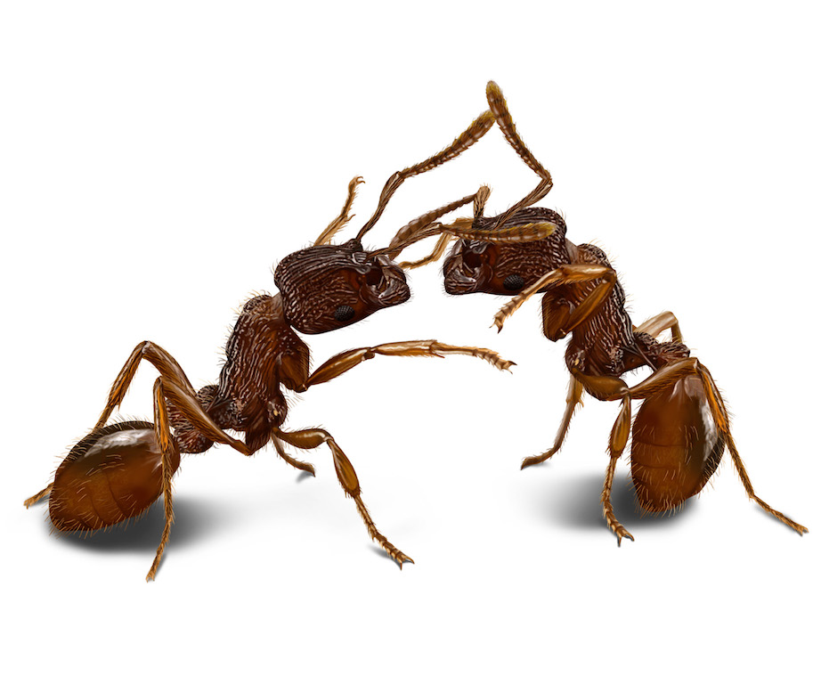 Ants as individuals
